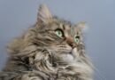 Are Maine Coon Cats Expensive To Maintain